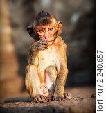 Купить «Портрет молодого макаки в задумчивости», фото № 2240657, снято 18 декабря 2010 г. (c) Николай Винокуров / Фотобанк Лори