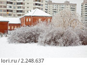 Купить «Кусты, после ледяного дождя. Городской пейзаж», фото № 2248637, снято 26 декабря 2010 г. (c) Parmenov Pavel / Фотобанк Лори