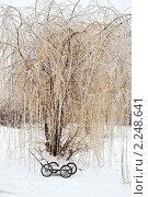 Купить «После ледяного дождя», фото № 2248641, снято 26 декабря 2010 г. (c) Parmenov Pavel / Фотобанк Лори