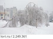 Купить «Последствия ледяного дождя в Москве», фото № 2249361, снято 28 декабря 2010 г. (c) Наталья Волкова / Фотобанк Лори