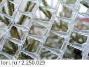 Купить «После ледяного шторма», фото № 2250029, снято 27 декабря 2010 г. (c) Сергей Лаврентьев / Фотобанк Лори