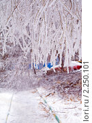 После ледяного шторма (2010 год). Стоковое фото, фотограф Сергей Лаврентьев / Фотобанк Лори
