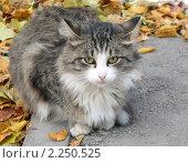 Кот. Стоковое фото, фотограф Анна Павлова / Фотобанк Лори