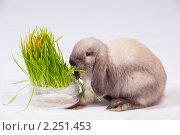 Купить «Кролик и трава», фото № 2251453, снято 21 ноября 2018 г. (c) Илья Малышев / Фотобанк Лори