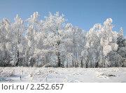 Зимний пейзаж. Стоковое фото, фотограф Наталья Волкова / Фотобанк Лори