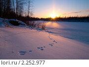 Купить «Зимний пейзаж. Заячьи следы на снегу.», фото № 2252977, снято 23 ноября 2010 г. (c) Икан Леонид / Фотобанк Лори
