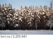 Зимний вечер в лесу. Стоковое фото, фотограф Максим Шагалов / Фотобанк Лори