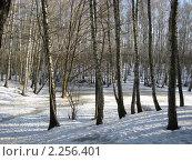 Начало весны. Стоковое фото, фотограф Татьяна Гомонова / Фотобанк Лори