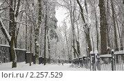 Купить «Зима в Битцевском лесопарке», эксклюзивное фото № 2257529, снято 1 января 2011 г. (c) Алёшина Оксана / Фотобанк Лори