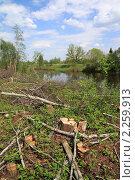 Купить «Вырубленный лес», фото № 2259913, снято 13 мая 2010 г. (c) Сергей Яковлев / Фотобанк Лори