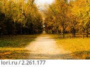 Осенняя аллея. Стоковое фото, фотограф Серебрякова Екатерина / Фотобанк Лори