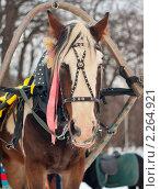 Купить «Лошадь в упряжке», фото № 2264921, снято 4 января 2011 г. (c) Михаил Никитин / Фотобанк Лори