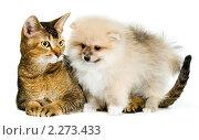 Купить «Кот и собака», фото № 2273433, снято 8 января 2011 г. (c) Vladimir Suponev / Фотобанк Лори
