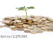 Купить «Зеленый росток из монет», фото № 2275593, снято 10 января 2011 г. (c) Баевский Дмитрий / Фотобанк Лори