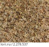 Купить «Семена укропа», фото № 2278537, снято 15 января 2011 г. (c) Екатерина Рыбина / Фотобанк Лори