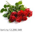 Купить «Букет алых роз на белом фоне», фото № 2290349, снято 18 января 2011 г. (c) Литова Наталья / Фотобанк Лори