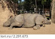 Купить «Два спящих валетом носорога в зоопарке Сан Диего», фото № 2291673, снято 12 ноября 2010 г. (c) Ирина Кожемякина / Фотобанк Лори