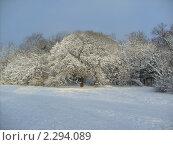 Снежные деревья. Стоковое фото, фотограф Ольга Рунышкова / Фотобанк Лори