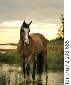 Купить «Соловый конь на закатном заливе», фото № 2298685, снято 20 марта 2019 г. (c) Natalie Anakonda / Фотобанк Лори