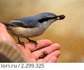 Купить «Угощайся, пташка!», фото № 2299325, снято 24 октября 2010 г. (c) Виктория Катьянова / Фотобанк Лори