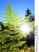 Купить «Папоротник», фото № 2303093, снято 27 июня 2010 г. (c) Икан Леонид / Фотобанк Лори