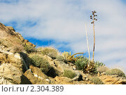 Купить «Пустыня Анза Боррего (Южная Калифорния, США)», фото № 2304389, снято 28 ноября 2009 г. (c) Иванова Марина / Фотобанк Лори