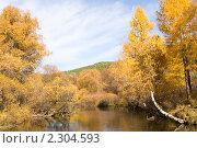 Желтые деревья на фоне голубого неба. Стоковое фото, фотограф Асадулина Юлия / Фотобанк Лори