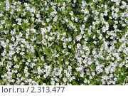 Купить «Цветочный фон», фото № 2313477, снято 8 мая 2010 г. (c) Литова Наталья / Фотобанк Лори