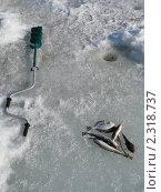 Купить «Улов», эксклюзивное фото № 2318737, снято 2 февраля 2011 г. (c) syngach / Фотобанк Лори