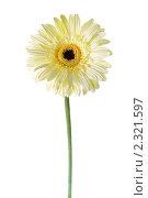 Купить «Белая гербера», фото № 2321597, снято 12 апреля 2010 г. (c) Литова Наталья / Фотобанк Лори