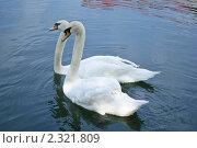 Лебеди. Стоковое фото, фотограф Сайфутдинов Ильгиз / Фотобанк Лори