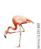 Купить «Розовый фламинго», фото № 2331869, снято 26 июля 2008 г. (c) Екатерина Овсянникова / Фотобанк Лори