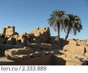 Купить «Египет, храм Амона-Ра в Карнаке. Две пальмы на руинах.», фото № 2333889, снято 12 октября 2010 г. (c) Равиль Шангараев / Фотобанк Лори