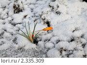 Цветок и иней. Стоковое фото, фотограф Ольга Зенухина / Фотобанк Лори