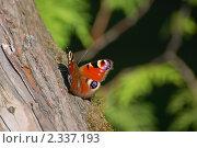 Бабочка. Стоковое фото, фотограф Мухина Татьяна / Фотобанк Лори