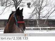 Купить «Лошадка в леваде на Московском ипподроме», эксклюзивное фото № 2338133, снято 11 февраля 2011 г. (c) lana1501 / Фотобанк Лори