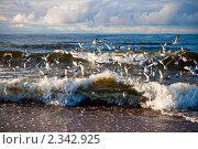 Купить «Волны и чайки, Балтийское море», фото № 2342925, снято 3 января 2011 г. (c) Анна Лурье / Фотобанк Лори
