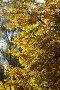 Осень, эксклюзивное фото № 2344477, снято 4 октября 2010 г. (c) Дмитрий Неумоин / Фотобанк Лори