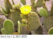 Купить «Кактусы в ботаническом саду Кальяри, Сардиния», фото № 2361805, снято 27 мая 2010 г. (c) Татьяна Крамаревская / Фотобанк Лори