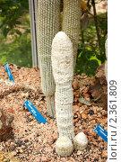 Купить «Кактусы в ботаническом саду Кальяри, Сардиния», фото № 2361809, снято 27 мая 2010 г. (c) Татьяна Крамаревская / Фотобанк Лори