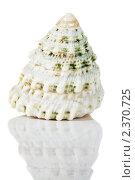 Купить «Морская раковина с отражением», фото № 2370725, снято 26 февраля 2011 г. (c) Сергей Лаврентьев / Фотобанк Лори