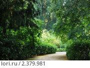 Зеленая роща. Стоковое фото, фотограф Ольга Дудина / Фотобанк Лори