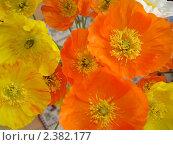Цветы крупным планом. Стоковое фото, фотограф Ефимова Ольга / Фотобанк Лори