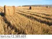 Купить «Уборка на поле. Сено в тюках.», фото № 2385601, снято 10 октября 2009 г. (c) Константин Безденежных / Фотобанк Лори