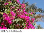 Яркие цветы. Стоковое фото, фотограф Сергей Захаров / Фотобанк Лори
