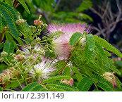 Южные растения. Стоковое фото, фотограф Клычникова  Наталья / Фотобанк Лори