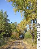 Дорога в лесу. Стоковое фото, фотограф Ефимова Ольга / Фотобанк Лори