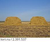 Два стога сена в поле. Стоковое фото, фотограф Ефимова Ольга / Фотобанк Лори
