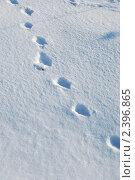 Купить «Следы на снегу», эксклюзивное фото № 2396865, снято 10 марта 2011 г. (c) lana1501 / Фотобанк Лори