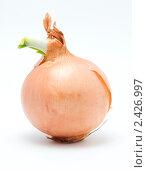 Купить «Проросший лук», фото № 2426997, снято 27 февраля 2011 г. (c) Лищук Руслан Викторович / Фотобанк Лори